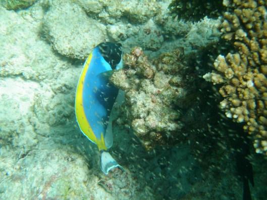 snorkelling Maldives