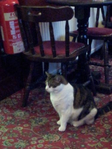 Lenny the Cat
