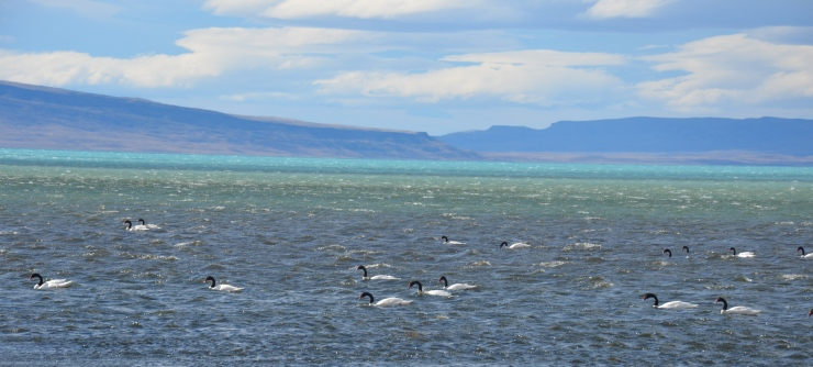 bird sanctuary El Calafate Laguna Nimez