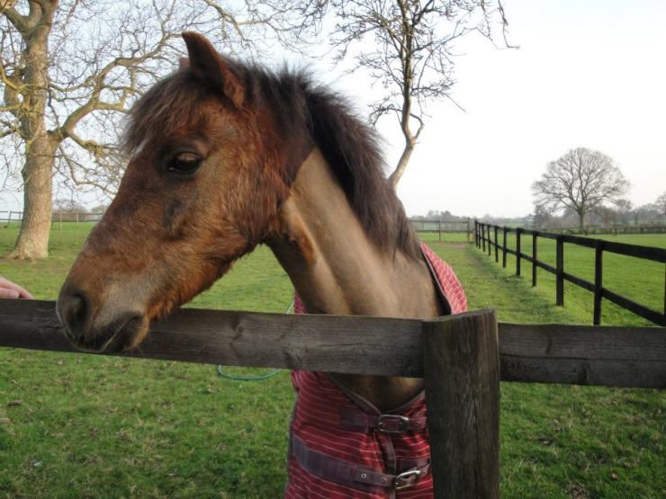 malvern countryside horse