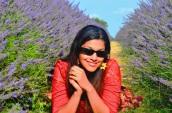 lavender fields Surrey