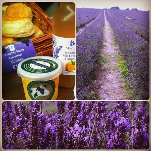 Mayfield Lavender Farm Lavender Scone, Lavender Ice Cream, Lavender Lemonade