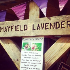 Mayfield Lavender Farm sign