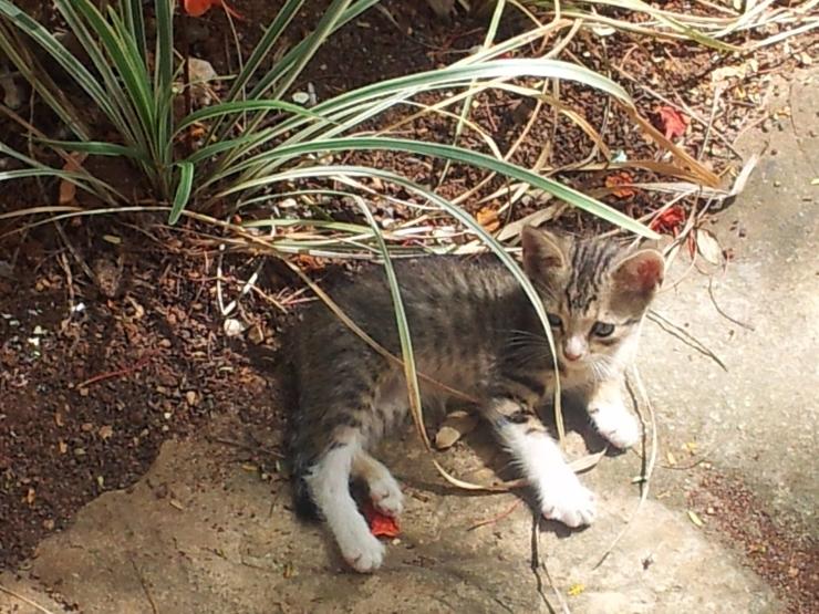 stray kittne Havana old town