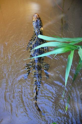 reptile Iguazu falls Argentina