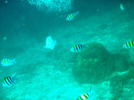Koh Haa snorkel black yellow fish