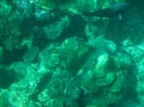 coral Koh Lanta
