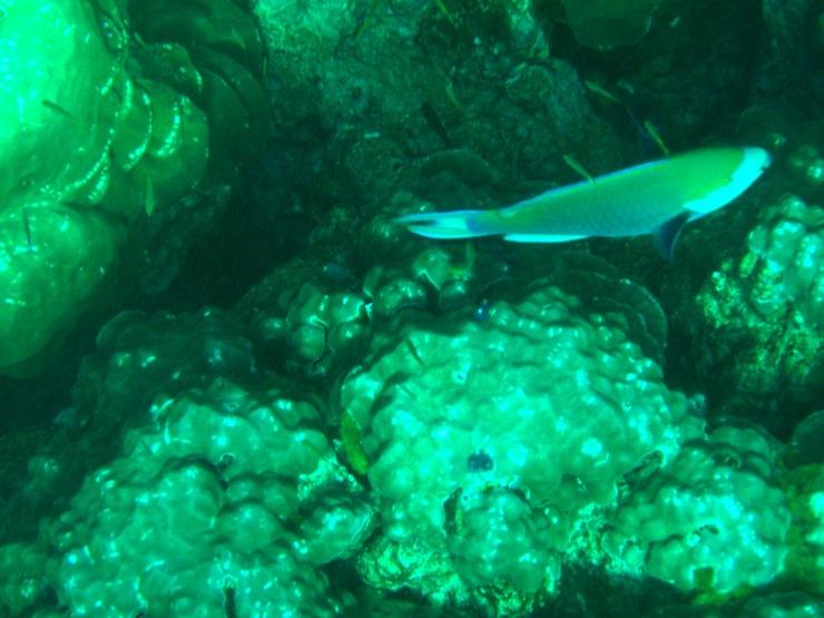 coral photos Thailand Lanta