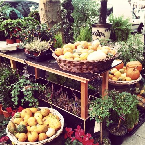 Belgium autumn fruits and plants