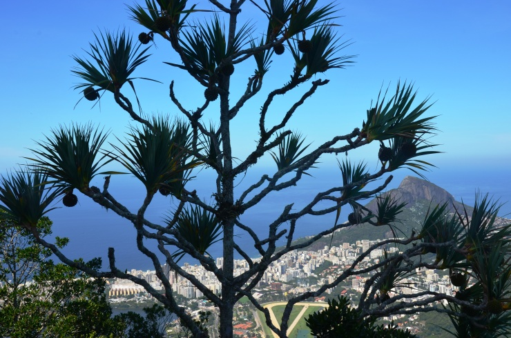 tree view from Corcovado