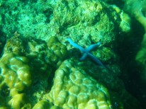 Scubafish snorkel tour