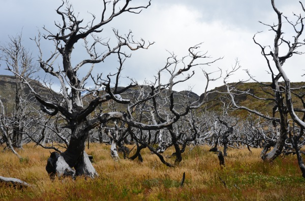 Torres del Paine trees fire damage