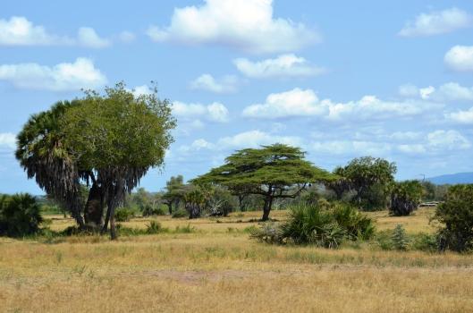 scenery landscape Selous Tanzania