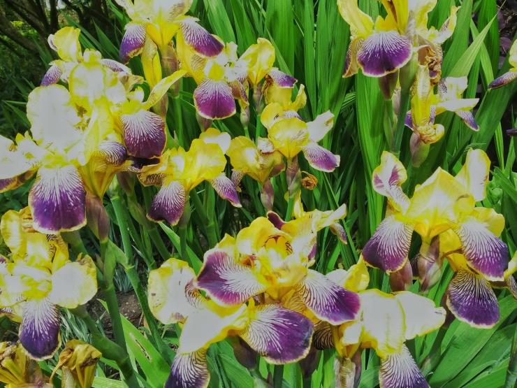yellow purple flowers