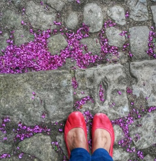 purple flower blossom petals floor
