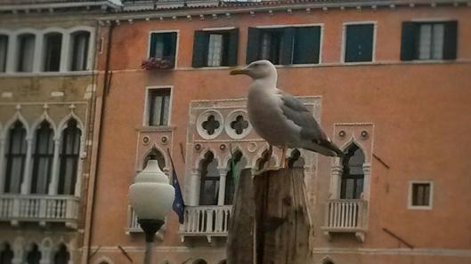 pigeon Rialto Venice