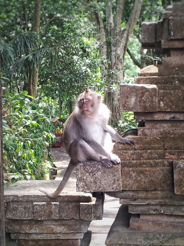 wildlife animal experience Bali