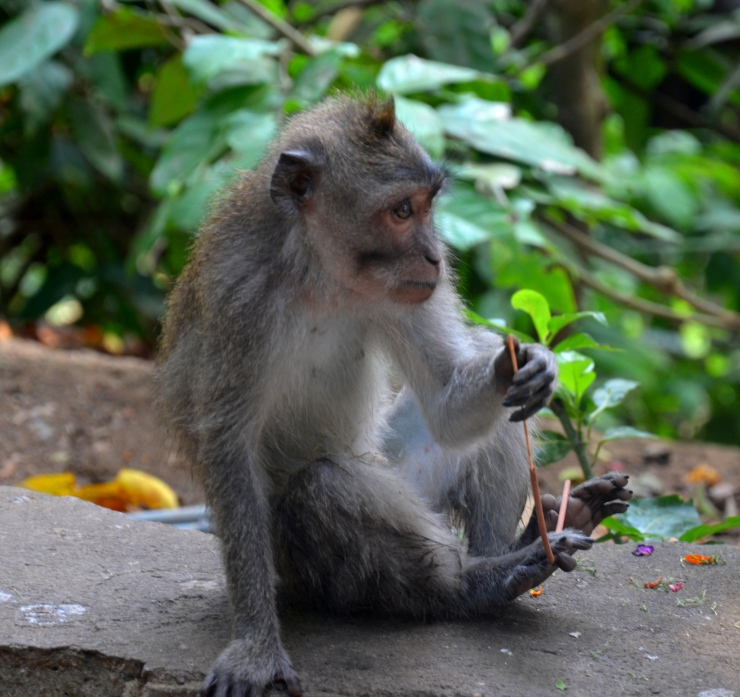 Sacred Monkey Forest Sanctuary Ubud Bali