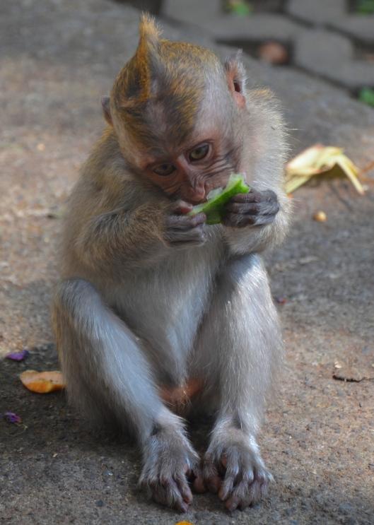 Ubud Bali travel blog