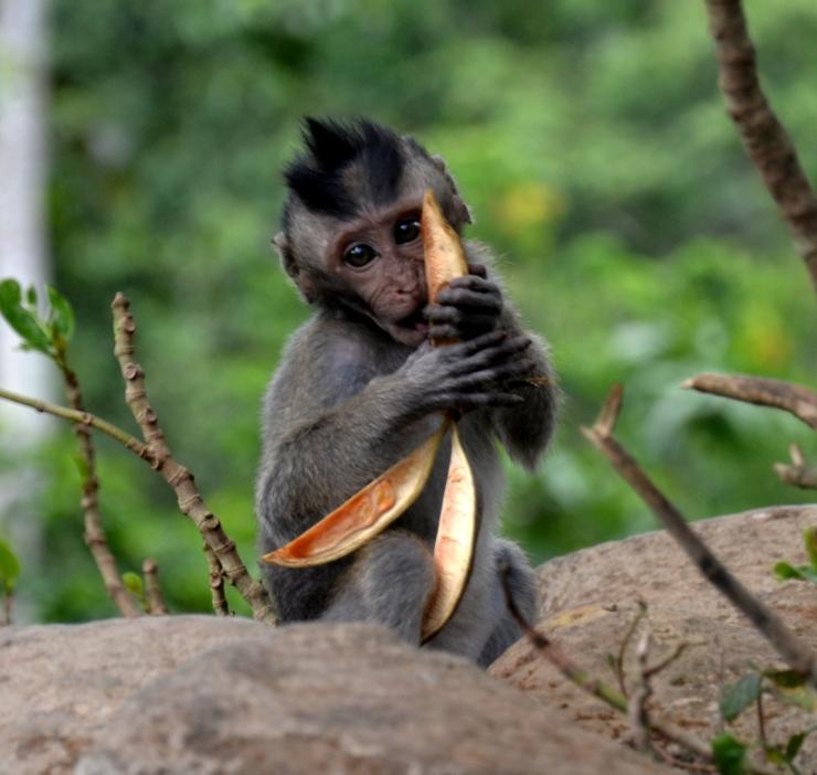 bananas monkeys Ubud Bali