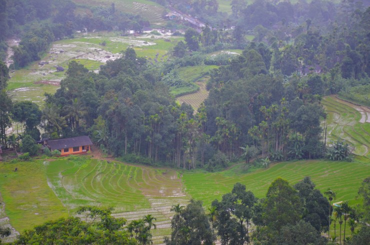 Nuwara Eliya Sri Lanka tea plantation