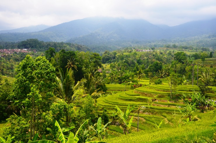 Jatulawih Rice Fields UNESCO Bali