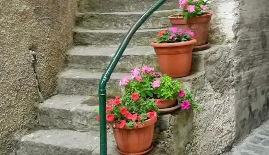 plants flowers Liguria Italy