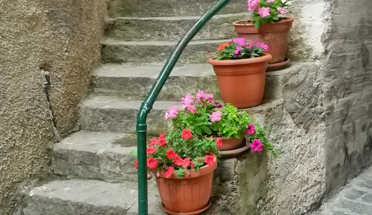 plants flowers Liguria Italy