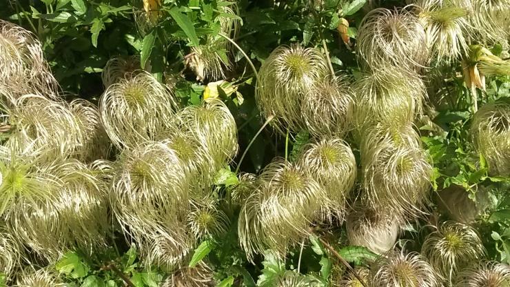 fauna plants flowers Durham Northumberland