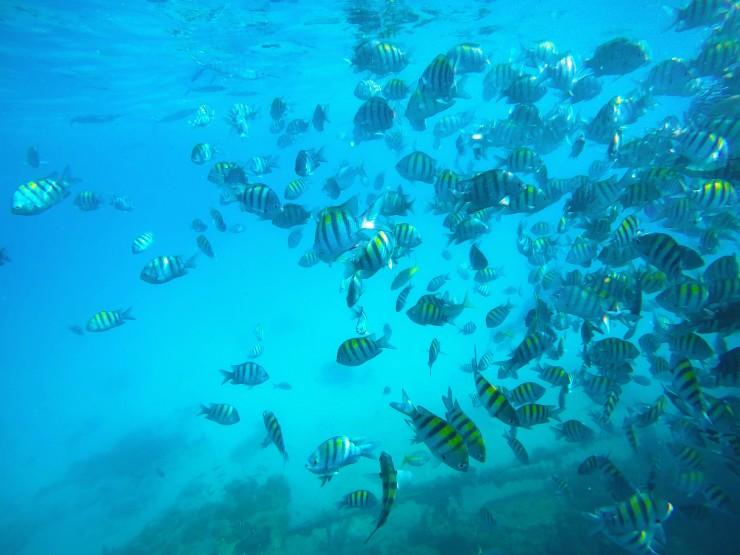 shipwreck sea turtle snorkel Barbados tour company