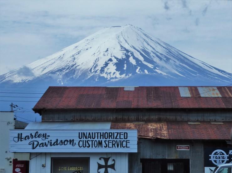 Shibazakura Festival Mount Fuji