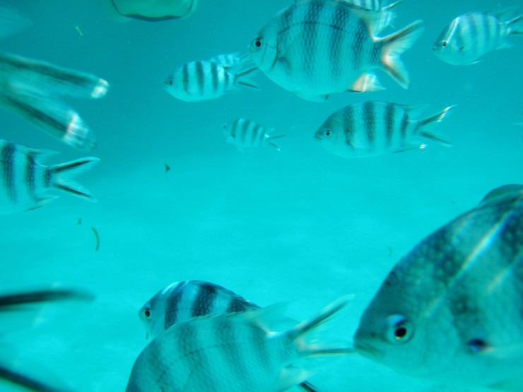 snorkelling tour Zanzibar