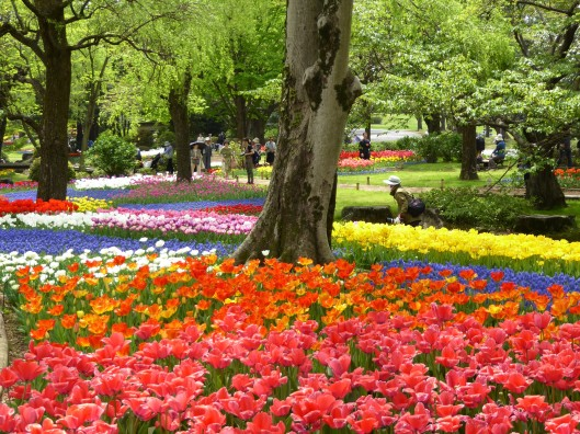 tulip festival Show Kinen Park Tokyo