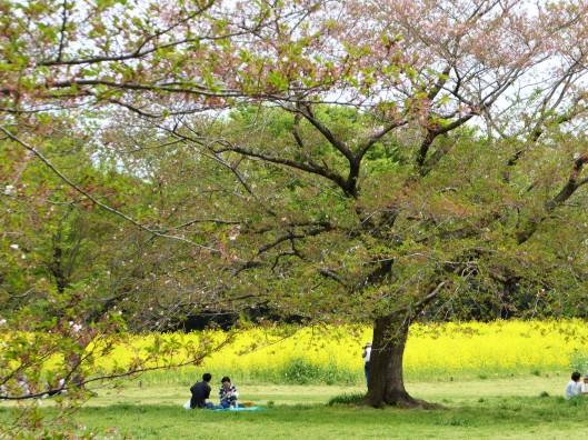 Hanami Tokyo Park
