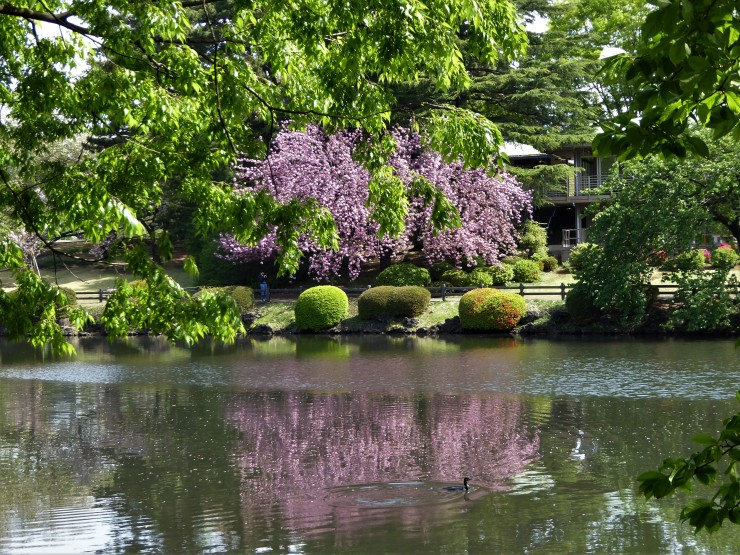 Tokyo Sakura Photo Spots
