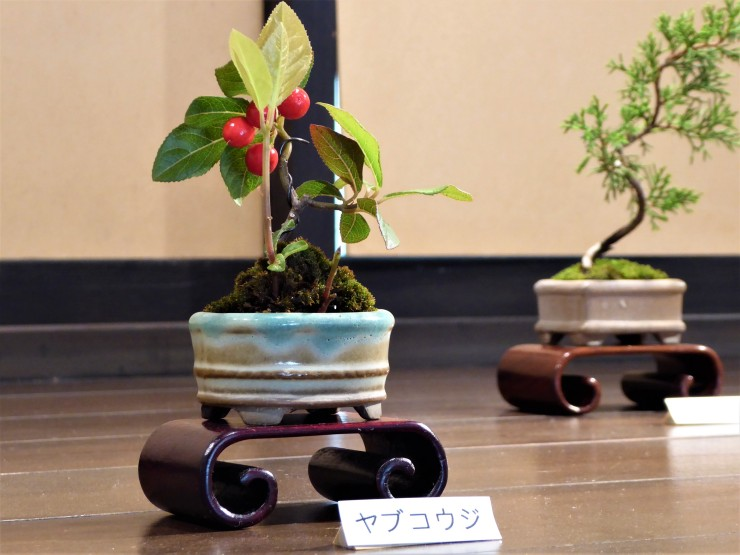 small bonsai tree Tokyo