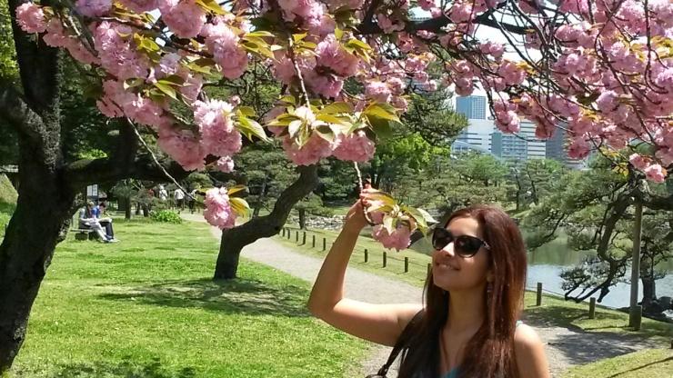 cherry blossom Japan travel blog