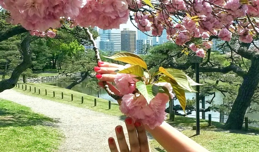 where to see cherry blossoms Tokyo