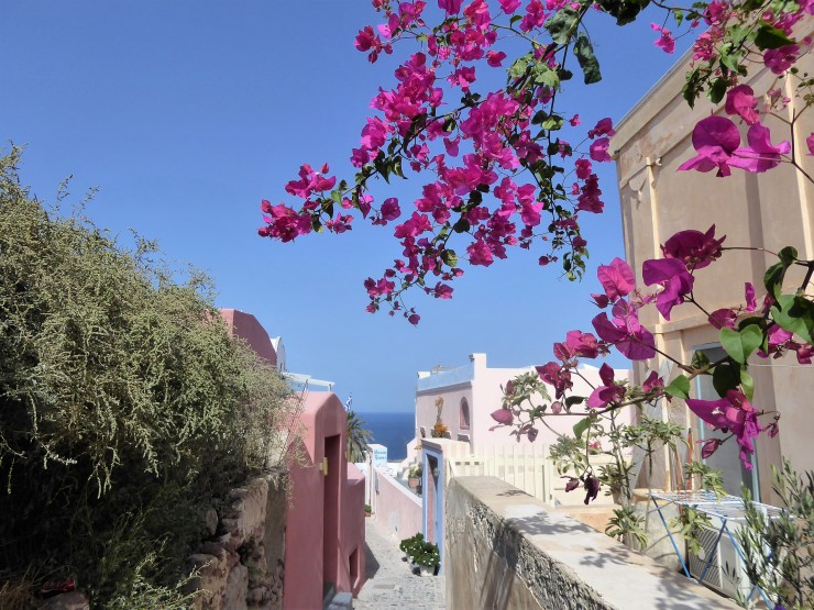 bougainvillea photos Santorini
