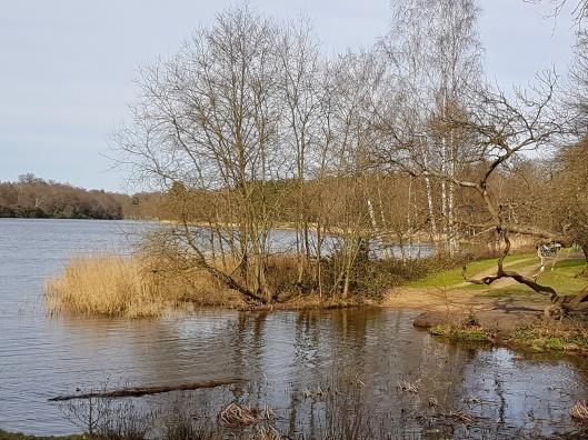 lake views Surrey