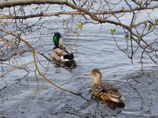 VIrginia Water Surrey blog