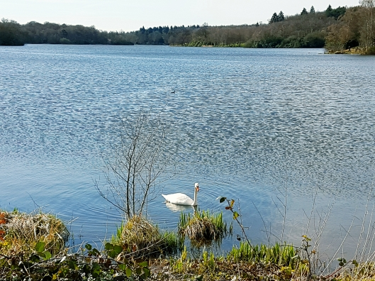 Surrey lakes