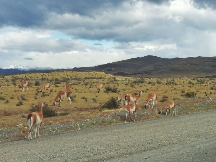 animals Torres del Paine