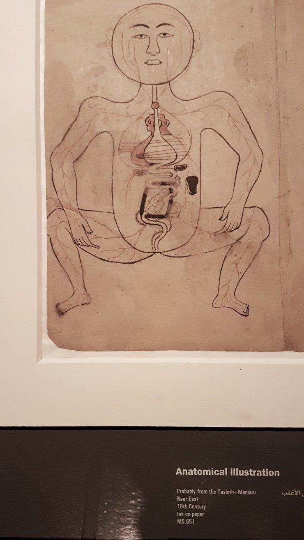 Old anatomical drawing