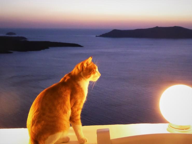 cats Santorini